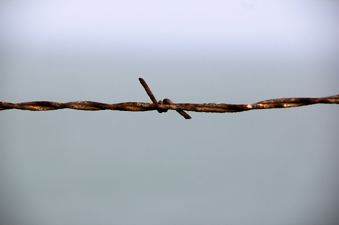 A single strand of rusted barbed wire against a light gray background.