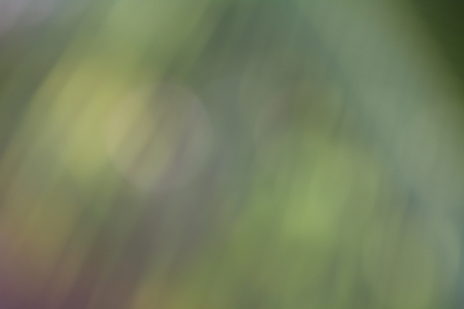 A blur of green with some red seen toward the bottom left corner.