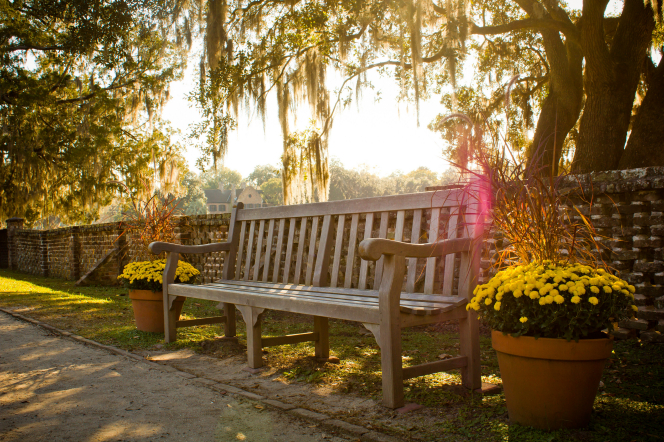 A wooden bench between two large pots full of yellow flowers, with a sun flare coming across the top of the bench.