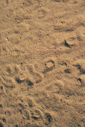 A surface covered with tan sand, littered with a random pattern of horseshoe prints.