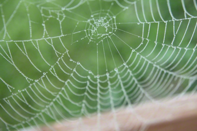 A spiderweb in a windowsill, completely covered in tiny water droplets, with the green of the outdoors seen in the background.
