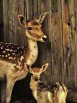 A photo of a mother deer and her young fawn standing near a wooden fence.