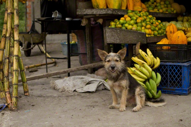 A dog sits near a bundle of bananas and other fruit in a fruit market.