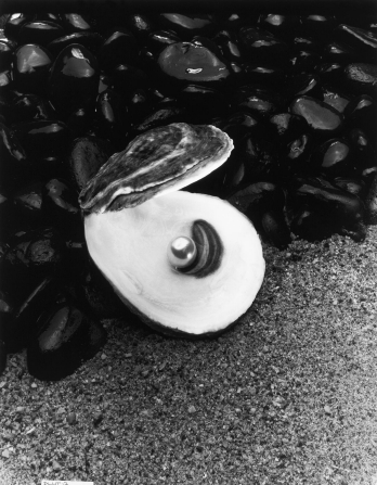A black-and-white image of an opened oyster with a pearl inside, sitting on rocks and sand.