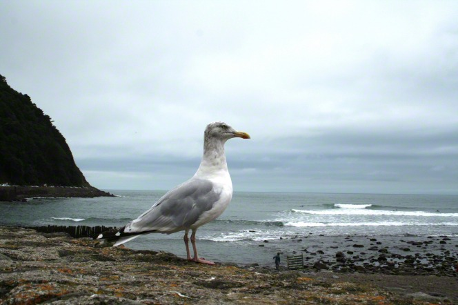 An image of a seagull standing on a rocky ledge overlooking a beach on an overcast day.