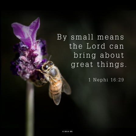A photograph of a bee on a purple flower, paired with the words from 1 Nephi 16:29.