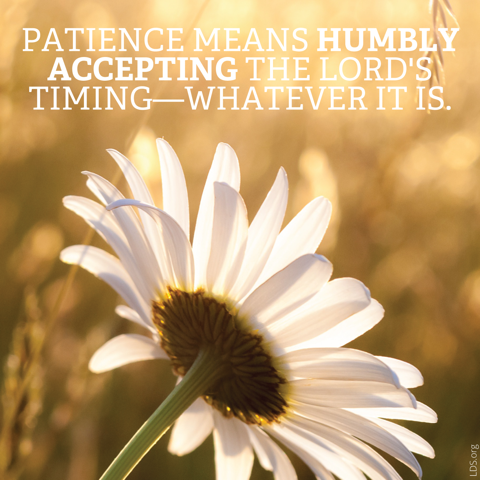 Patience Is Humbly Accepting