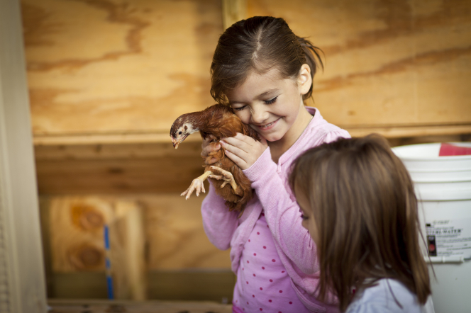 A girl in a pink shirt hugs a chicken close to her face while another girl stands nearby.