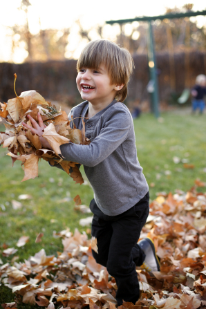 A little boy in a gray shirt picks up an armful of brown leaves while walking through a pile of leaves on the ground.