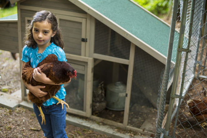 A young girl holds a brown chicken in her arms and looks up while standing in front of a chicken coop.