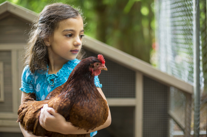 A portrait of a young girl holding a chicken in her arms, looking to the side and standing in front of a chicken coop.