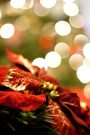 A red poinsettia decorated with gold leafing near a lit Christmas tree, which is seen blurred in the background.