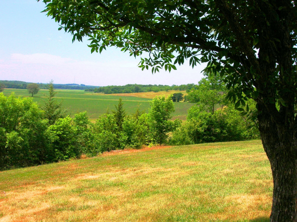 The green fields of Adam-ondi-Ahman in Missouri and a tree in the foreground.