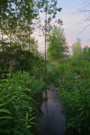 A river runs through the Sacred Grove with trees in the background