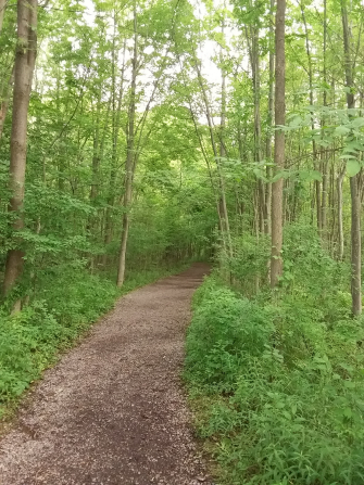 A dirt pathway going through a grove of trees.