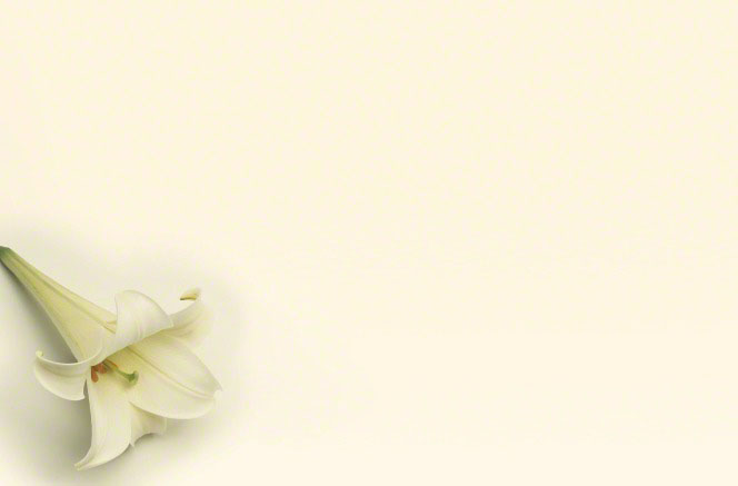 A white and green lily lying on a plain cream-colored background.