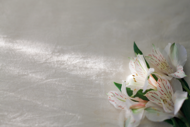 Four pink-speckled white lilies lying on a smooth piece of white linen.