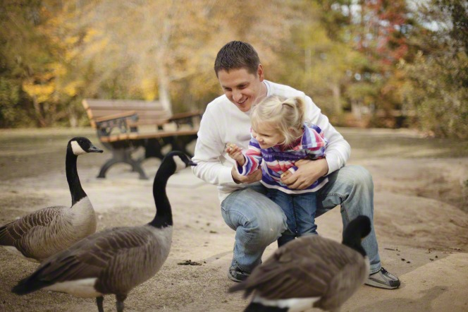 A father holds his toddler-age daughter and helps her feed the geese around them.