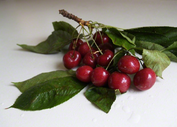 Bright red cherries on a branch.