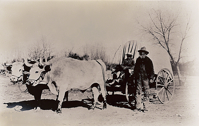 A black-and-white photograph depicting two oxen pulling a small covered wagon, with one man sitting in the driver's seat and another walking nearby.
