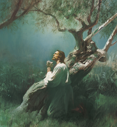 Christ in a white robe, kneeling near a large olive tree, with hands clasped, looking upward.