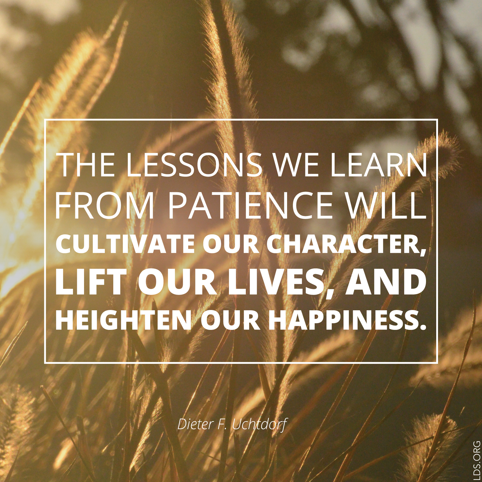 Cultivate Our Character