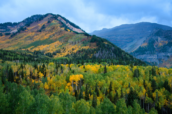 The Alpine Loop mountains covered in trees with green and yellow leaves during the autumn season.