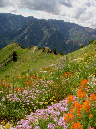 A landscape image of orange and purple flowers in a meadow surrounded by mountains.