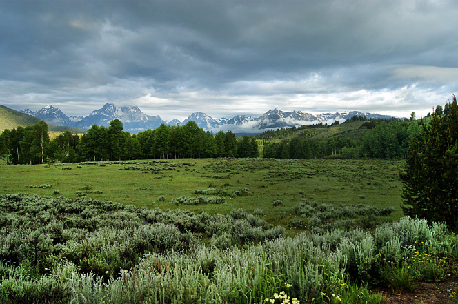 Meadows with green grass, brush, and trees surrounded by the Teton Mountains.