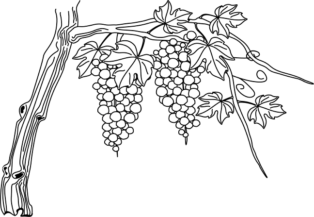 Drawing Of A Grape Vine