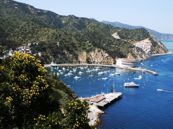 A harbor filled with white boats below a mountainside at Santa Catalina Island in California.