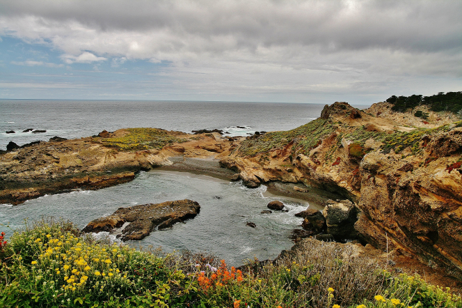 Brush, flowers, and rocks along the coastline with clouds overhead.