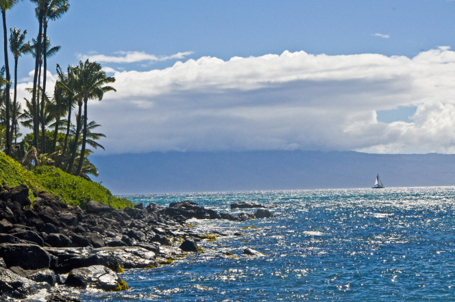 A beach with rocks, green brush, and palm trees bordering an ocean with a sailboat in the distance.