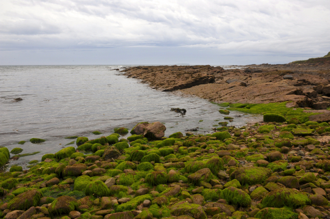Rocks covered with green moss outline the coast in Scotland with clouds in the sky.