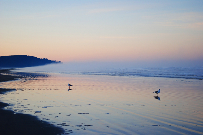 Two seagulls walking on the ocean coastline during sunrise at Long Beach in Washington State.