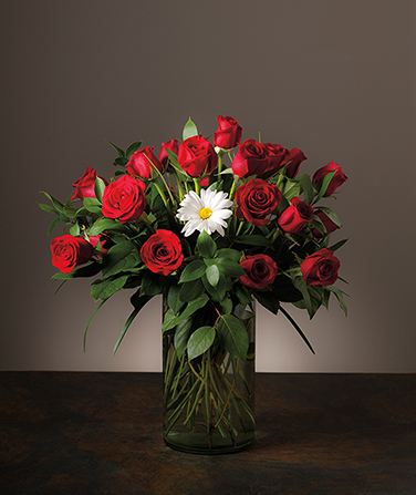 A photograph of a flower vase in which one white daisy is surrounded by long-stem red roses.