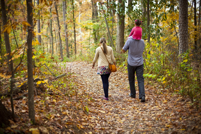 A mother and father walk together during the autumn with their daughter, who is on her father's shoulders.