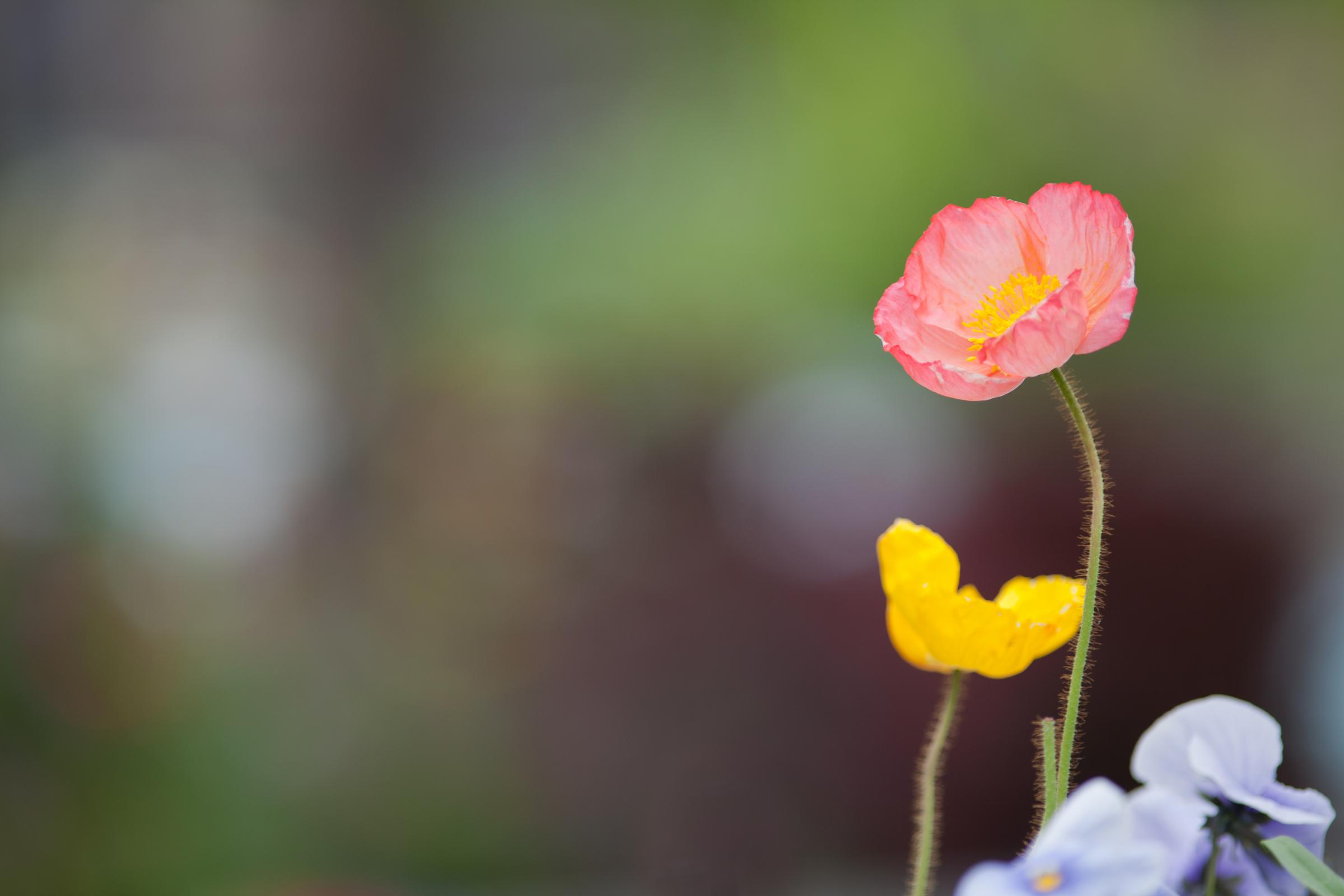 Little flowers share mightylinksfo