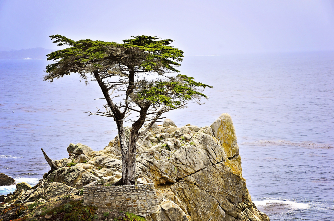A cypress tree surrounded by a stone wall on a cliff by the ocean.