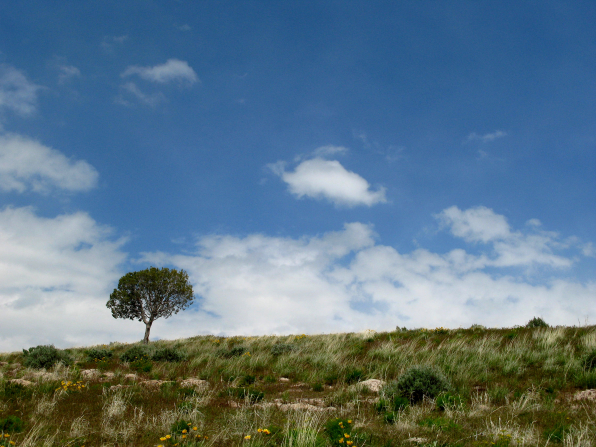 A tree stands alone in a field of brush and yellow flowers, with a blue sky and white clouds above.