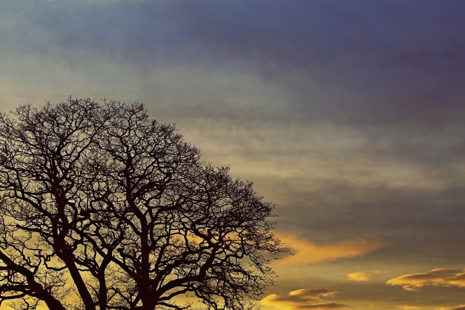 A leafless tree silhouetted against a sunset with clouds overhead.