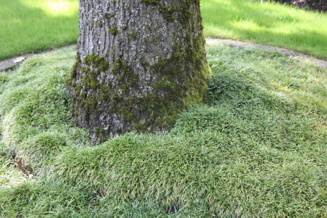 The bottom of a tree trunk covered with moss and surrounded by grass.