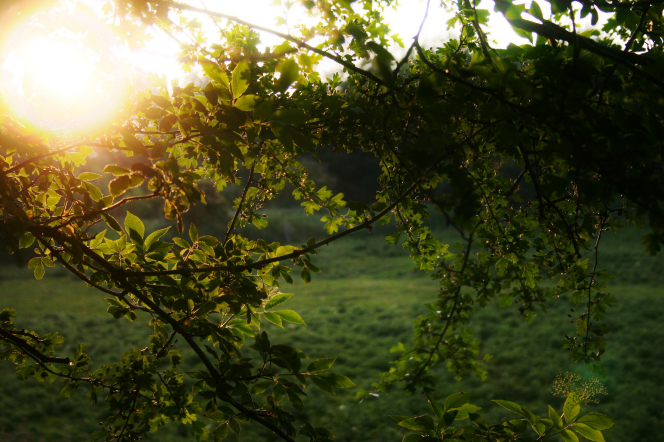The sun shines through green, leafy branches on a tree.