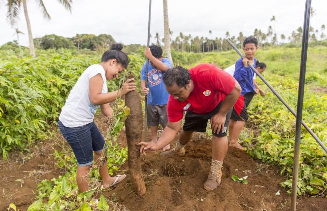 Fanguna family planting yams