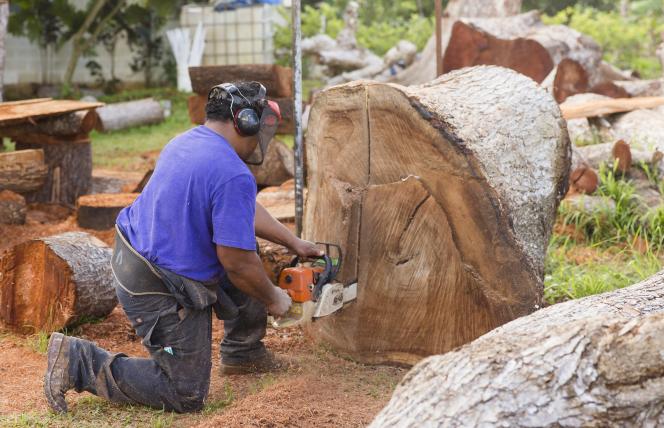 Feinga using a saw on a tree stump