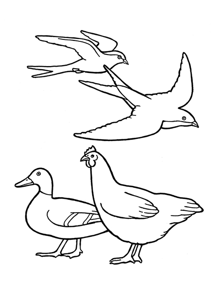 A black-and-white illustration of two birds, a chicken, and a duck.