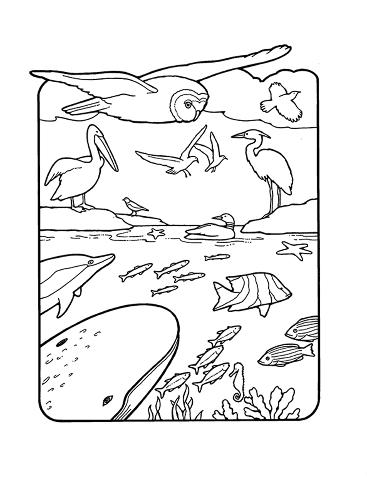 Creation Fowls And Fishes