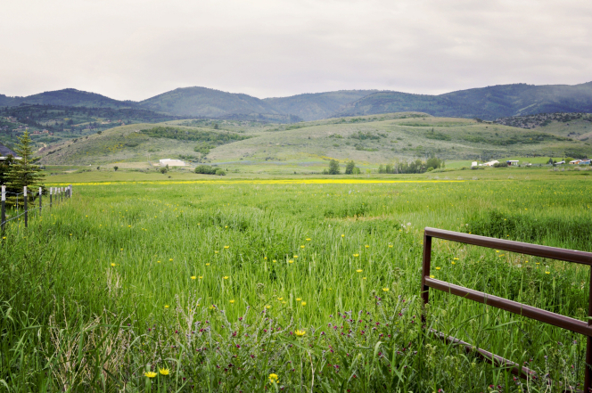 A gate in a grassy meadow with yellow flowers and mountains in the distance.