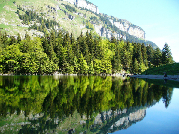 A mountain covered with weeds and with green pine trees lining the bottom, reflected in the lake.