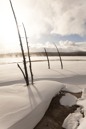 Large twigs sticking out of the snow-covered ground at Yellowstone National Park, with clouds in the sky.